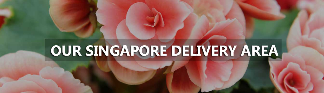Our Singapore Delivery Area
